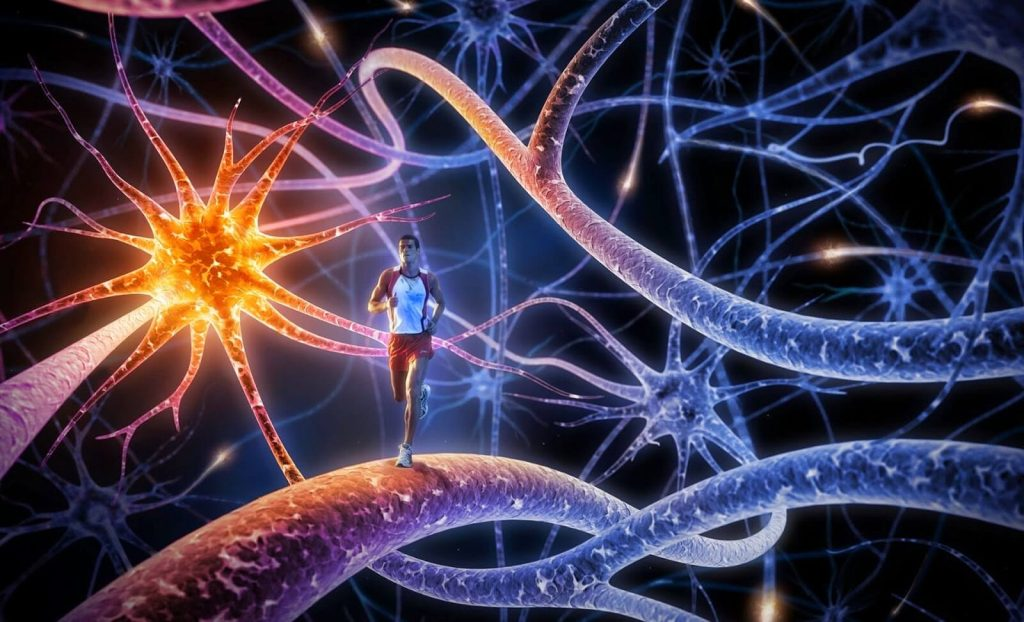 sport and immune system